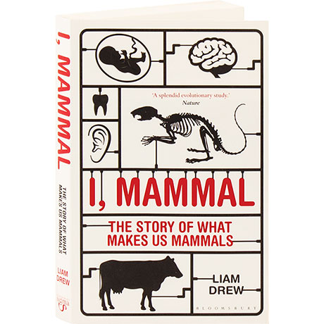 I Mammal