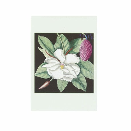 Magnolia Small Boxed Cards