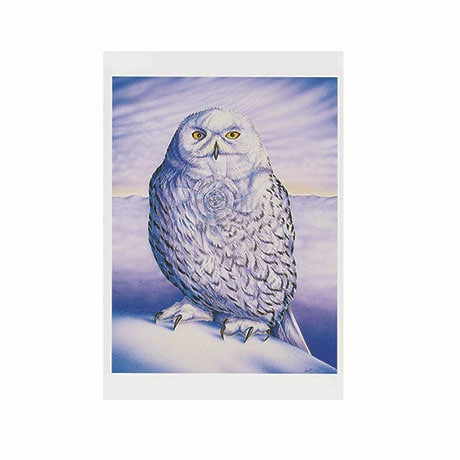 Judith Sparks: Snowy Owl Boxed Small Notecards