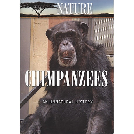 Nature—Chimpanzees