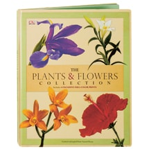 The Plants & Flowers Collection