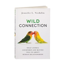 Wild Connection