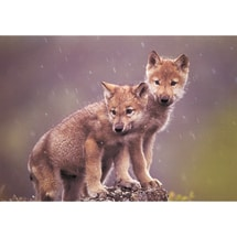 Gray Wolf Pups Boxed Holiday Cards